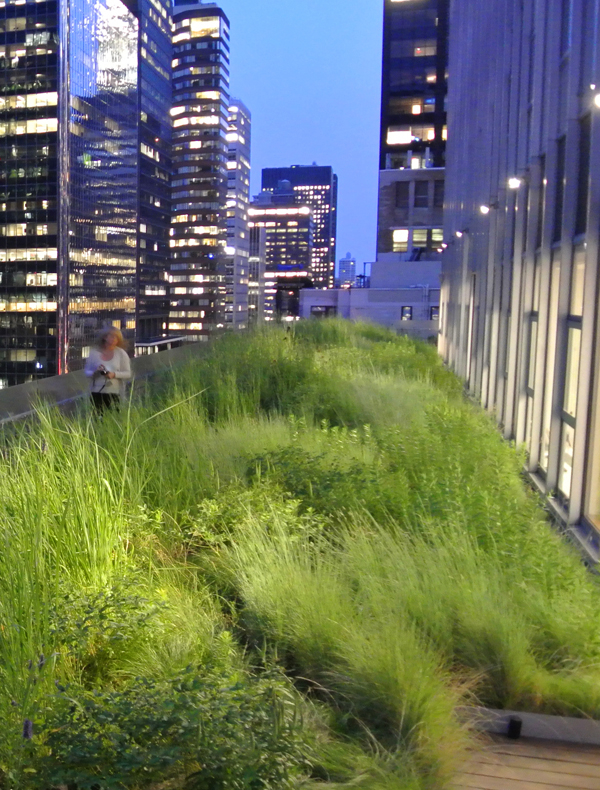 Green roof on midtown high rise in New York City